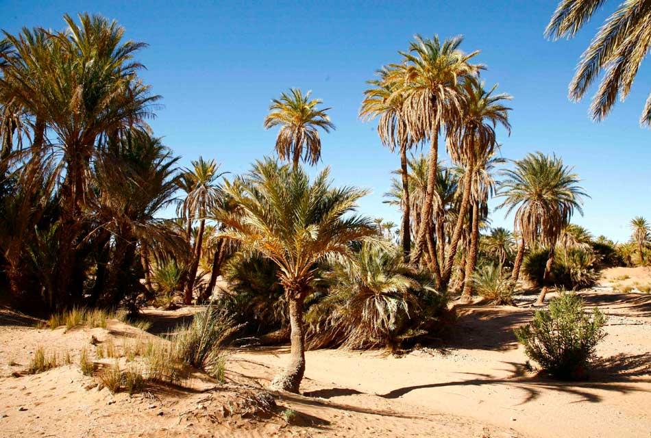 merzouga trees