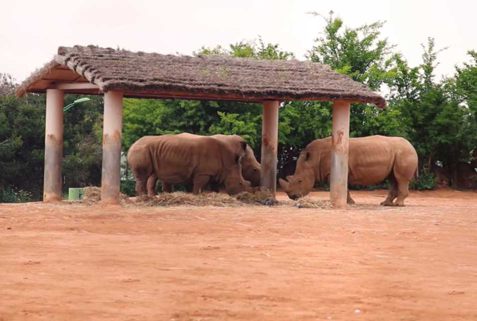 Jardin Zoologique National OF Rabat