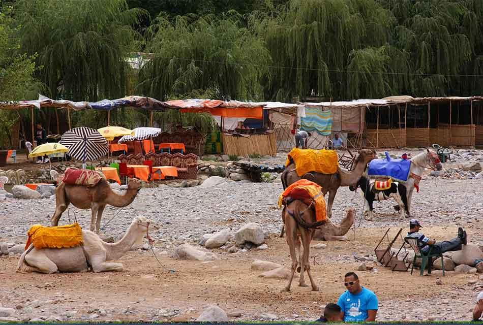 Camel Trek -Asni
